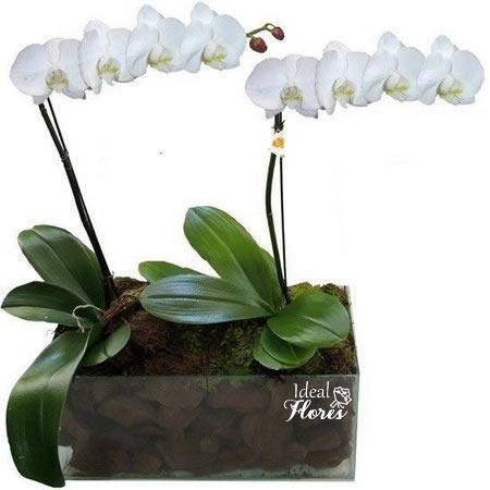 1108 Orquídea  Par Perfeito