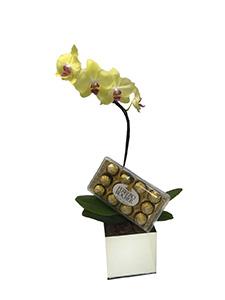 1165 Orquídea Yellow Doce