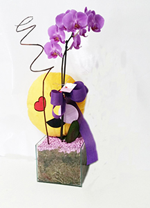 1173 COMBO Orquídea com Pelúcia