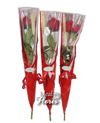 1672 Rosas Individuais para Presente