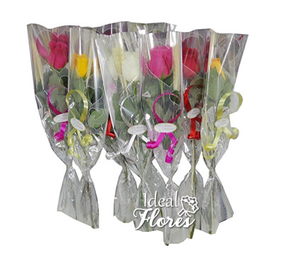 1676 Rosas Embaladas Especiais Coloridas