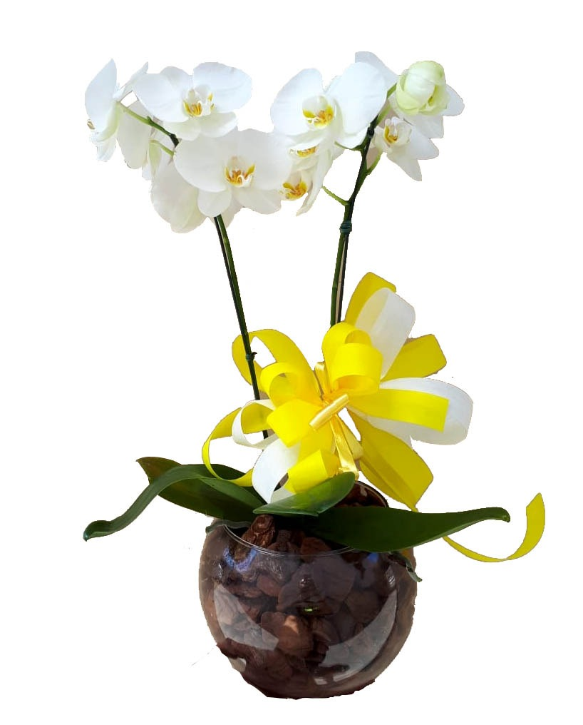 2204 Orquídea Branca Embeleze