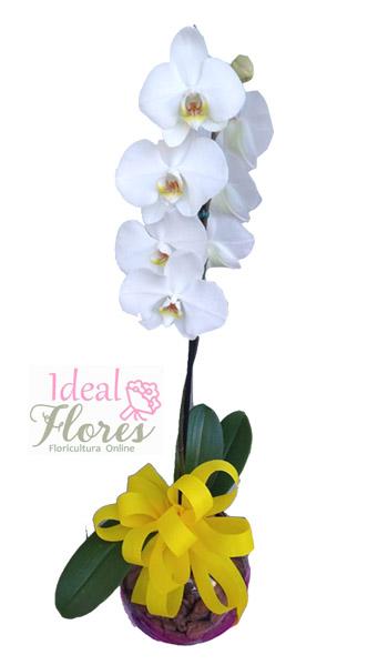 3354 Orquídea Branca Decorada em Esfera Vitral