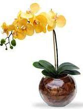 4522 Orquídea Golden