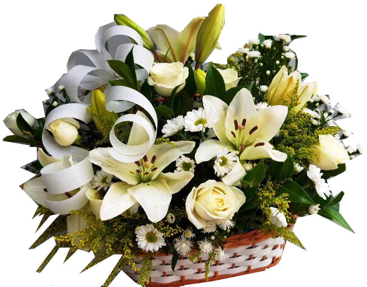 4557 Cesta Flores Nobres