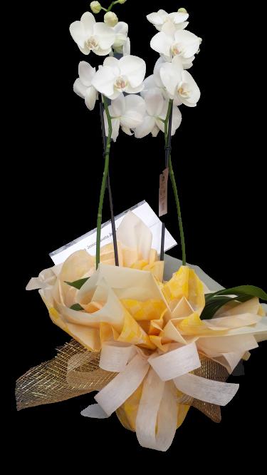 4748 ORCHID BEATIFUL FLOWER