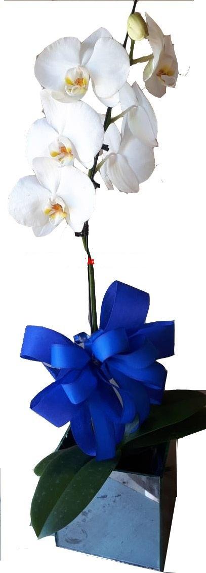 4751 Orquídea no Cachepô Espellhado