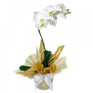 4767 Orchidée Sophistiquée