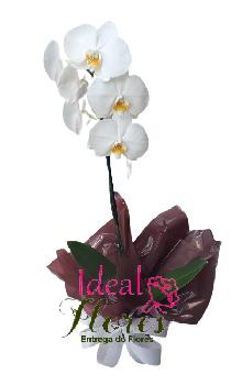 4791 Orquídea Phalaenospis Branca 1 Haste