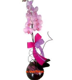 5507 Orquídea Rose c/ 1 Haste