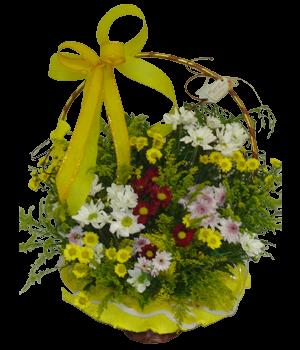 5509 Cesta Energia das Flores