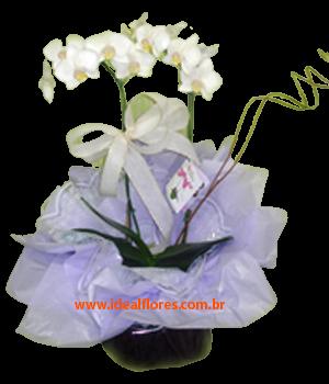 5548 White Flowers