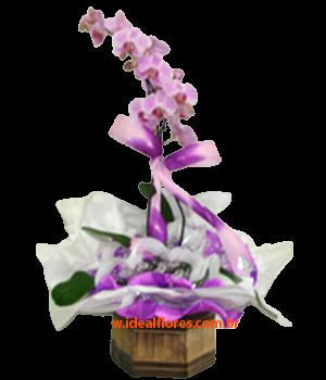 5549 Orquídea no Cachepot